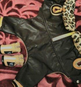 Ботиночки для маленьких пород,и курточка на шпица.
