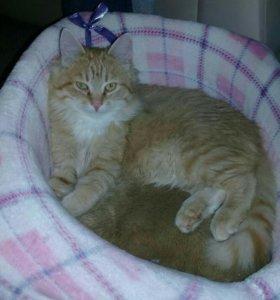 Котик 5 месяцев даром