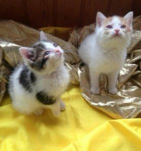 Котята 1.5 месяца-даром!