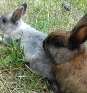Декаротивные Крольчата