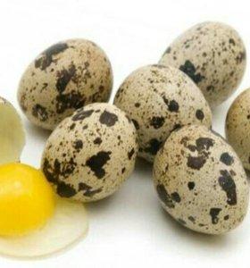 Яйцо домашнее перепелиное