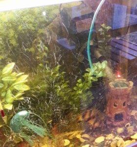 Аквариум вместе с рыбками