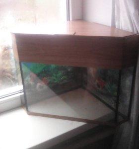 Продаю аквариум угловой на 25 литров