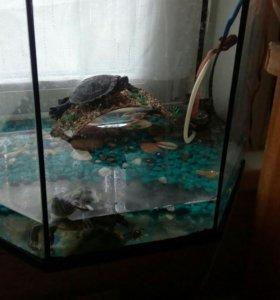 Черепашки+аквариум