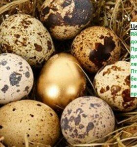 Яйцо инкубационное перепелов белых