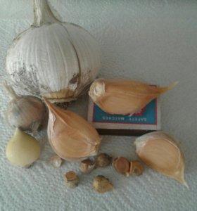 лук-чеснок Карамболь