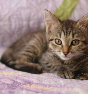 Котенок девочка.