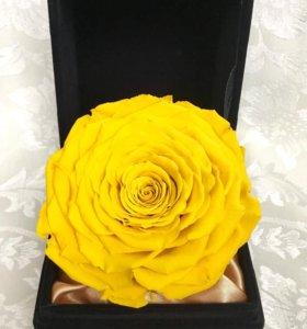 Жёлтая вечная Роза в шкатулке