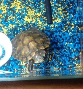 Красноухая черепаха со всеми удобствами