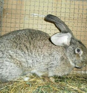 Кролики и крольчата