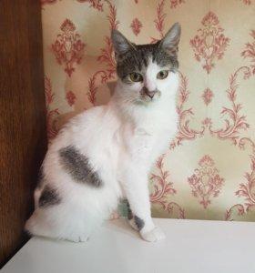Кошка 3 года девочка