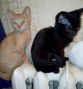Котятки, по 2 месяца