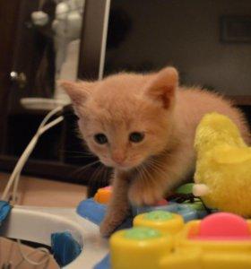 Котята в добрые руки. Осталось 2 котенка!!!