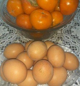 Яйцо домашнее диетическое.