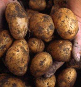 Продам картошку мелкую,на корм