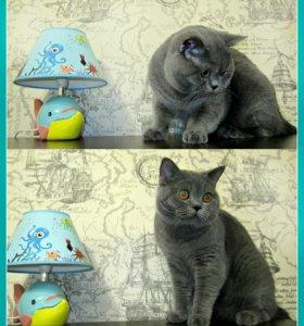 Вязка (кот).