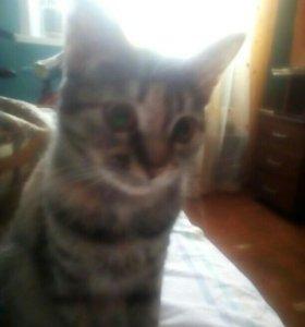 Кошка 1,5 г. Сирота!