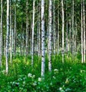 Березовый лес 50 ГА кругляк дрова
