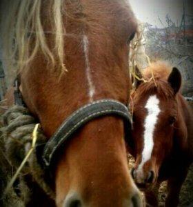 Лошадь с жеребёнком.
