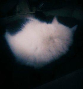 Кошечка очень ласковая,послушная.