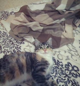 Добрый и доверчивый котенок