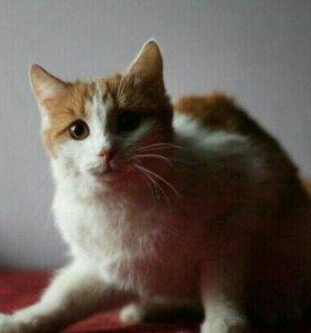 Молодой котик в добрые руки