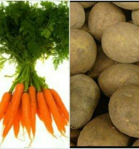 Картофель,морковь!