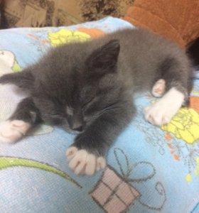 Отдам котёнка, второй месяц. Девочка