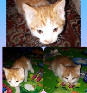 Кот 3 месяца