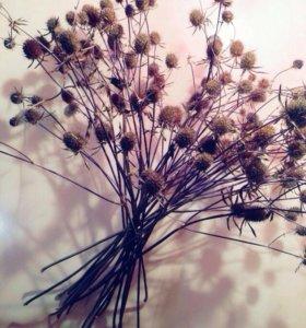 Сухоцветы для творчества