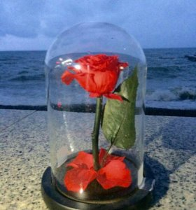 Вечная роза в колбе 🌹