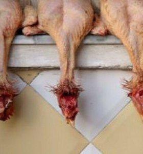 Куриные шеи