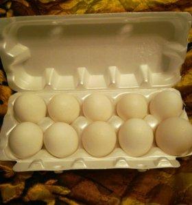 Яйцо куриное домашнее 100 р.за десяток в саблино