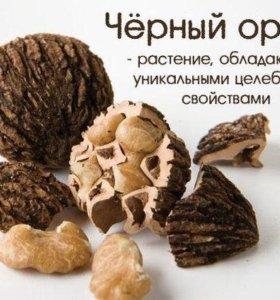 Черный орех семена