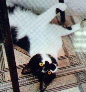Котька Мур