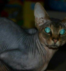 Котик для кошечки