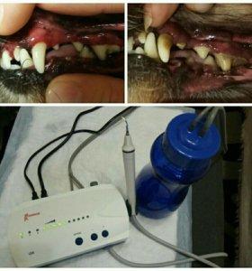 Ультразвуковая чистка зубов собакам и кошкам