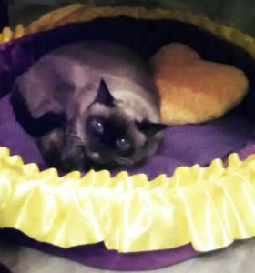 Лежанка для кошек/собак