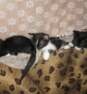 Черно-белые котята