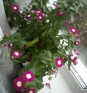 Обменяю цветок на другой