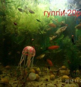 Рыбки гуппи,малинезия,меченосцы,улитки ампуллярии