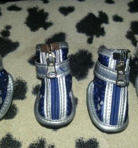 Новые ботинки для собак мелких пород