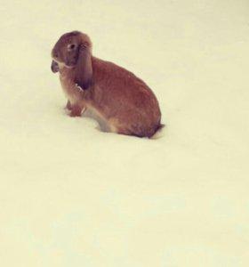Кролики ,парода бараны 1-8 месяцев