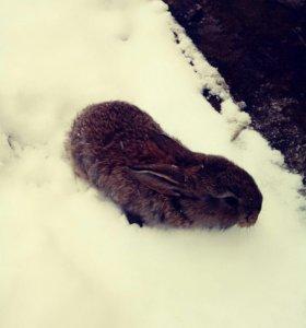 Кролики ,парода бараны 1-4 месяц