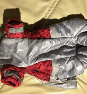 Куртка тёплая, для собак маленькой породы,  Б/У