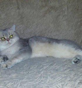 Котик на вязку