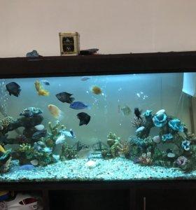 Прод.аквариум 500 литров