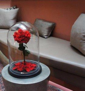 Вечная Роза в колбе подарок любимым (гравировка!!)