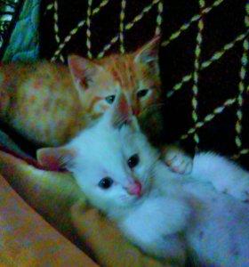 Крупные котята