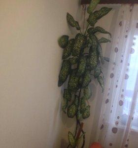 Растение ,цветок